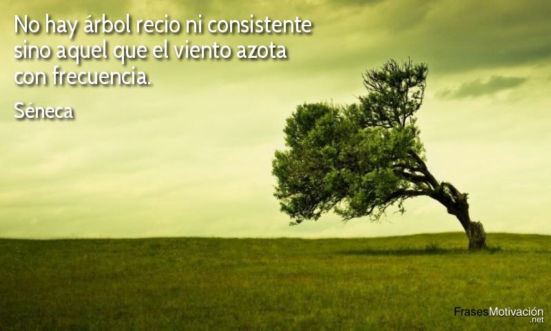 No hay árbol recio ni consistente sino aquel que el viento azota con frecuencia. - Séneca