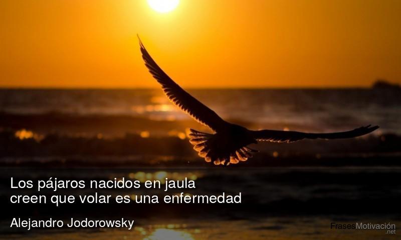 Los pájaros nacidos en jaula creen que volar es una enfermedad. - Alejandro Jodorowsky